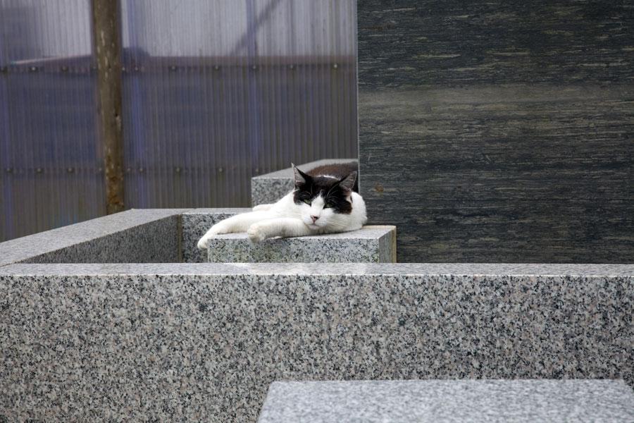 猫スタッフ|猫まるカフェ - Nekomaru Cafe