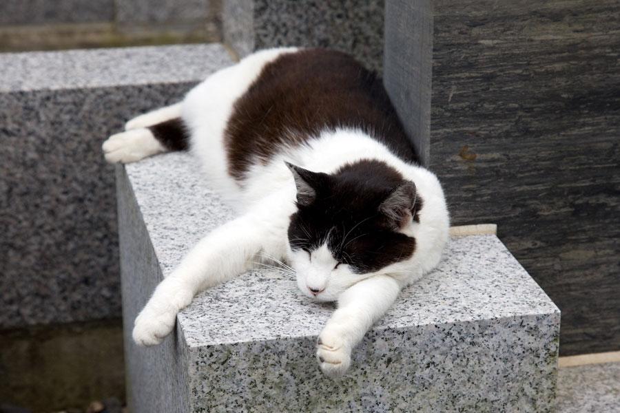 佐賀の猫カフェコロンの癒しブログ - ameblo.jp