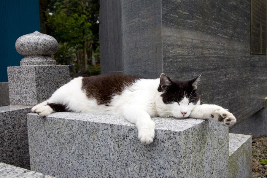 【悲報】ワイの行きつけの猫カフェの推し猫、突如 …